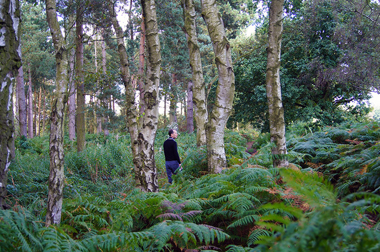 John explores the woodland