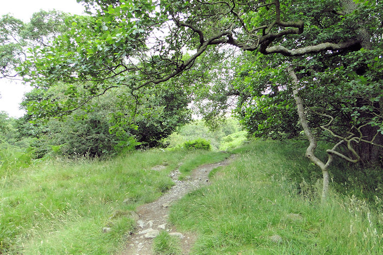 The lovely woodland trail