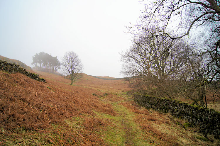Into the open on Loughrigg Fell