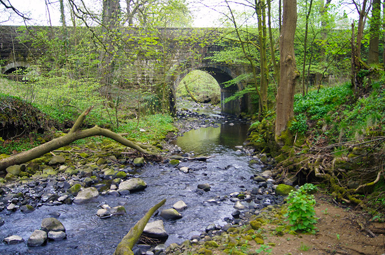 Walks In Lancashire Whalley Spring Wood Read Park