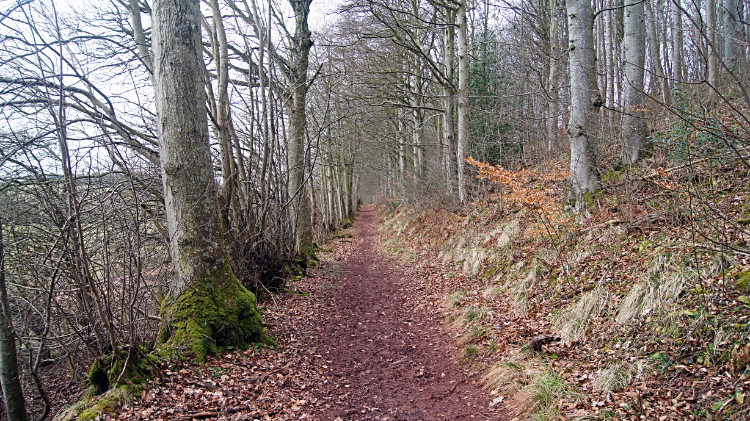 St Cuthbert's Way path through Broad Wood