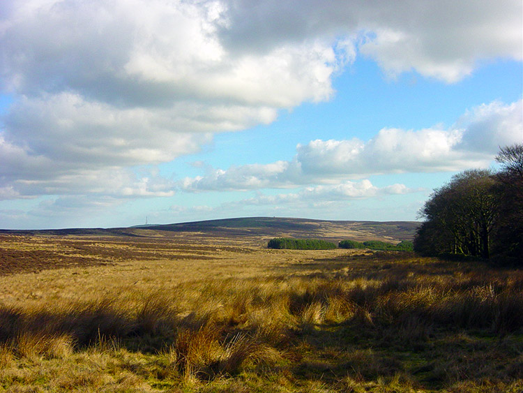 Denton Moor and Cross Bank Plantation