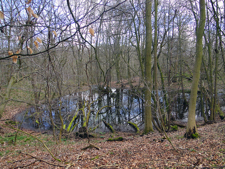 A woodland pond at Mickley Barras