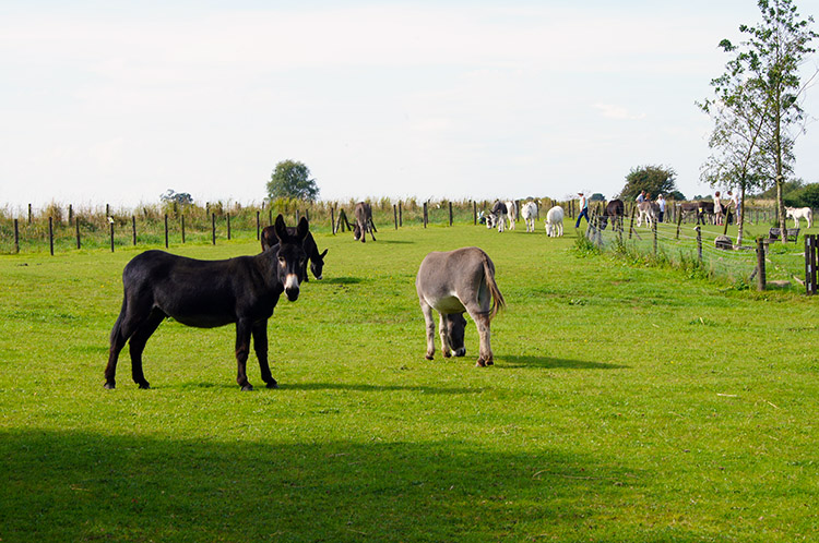 Donkeys at Lineham Farm Children's Centre