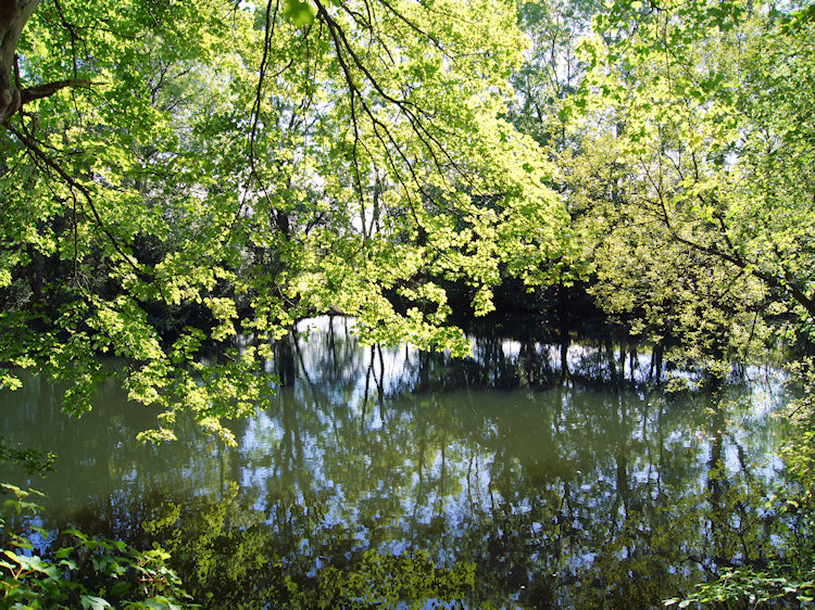 Pond at the begininng of Limekiln Wood
