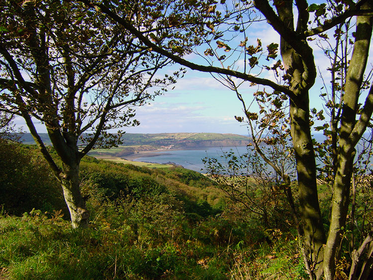 Delightful walking from Ravenscar to Stoupe Brow