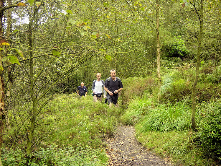 Walking through enchanting Gradbach Wood