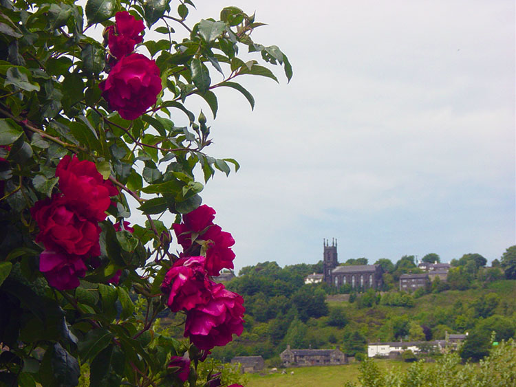 Looking across to Millwood from the Rochdale Canal