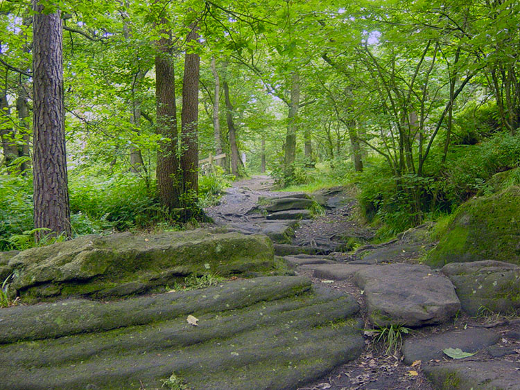 National Trust woodland near Hardcastle Crags