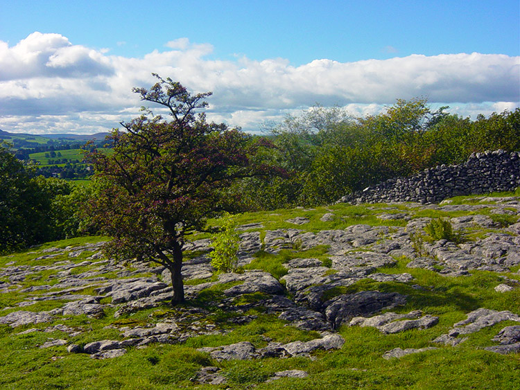 Limestone landscape on the Dales Way near Grassington