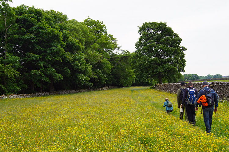 Walking through meadow above Brough Scar