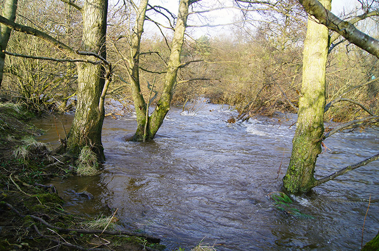 River Ure on new ground near Cover Bridge