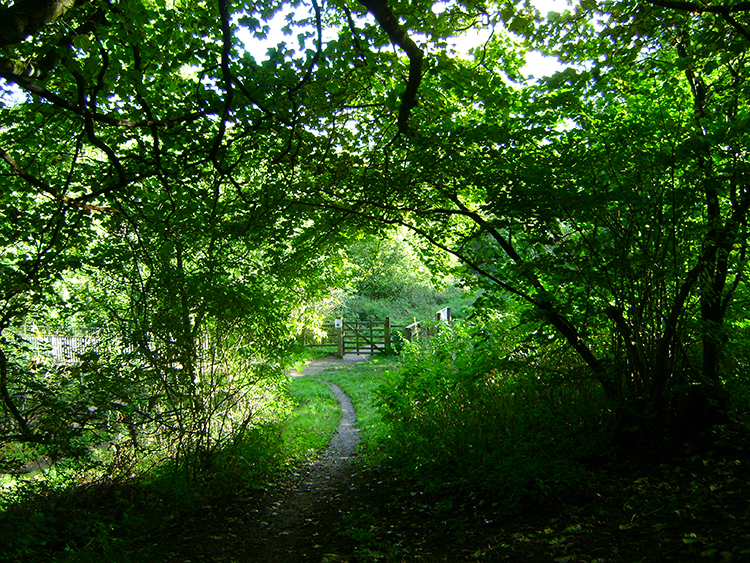 Trail through Hudswell Woods