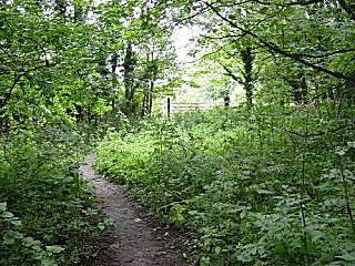 Woodland in Elloughton Dale
