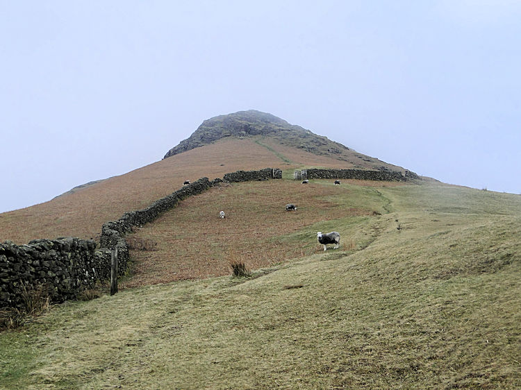 The climb from Helmside to Steel Fell