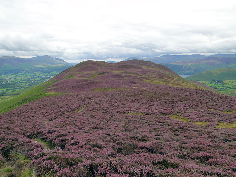 The heather covered whaleback of Barrow