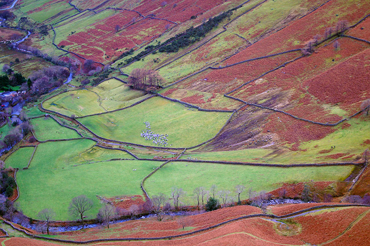 Field patterns in Wasdale
