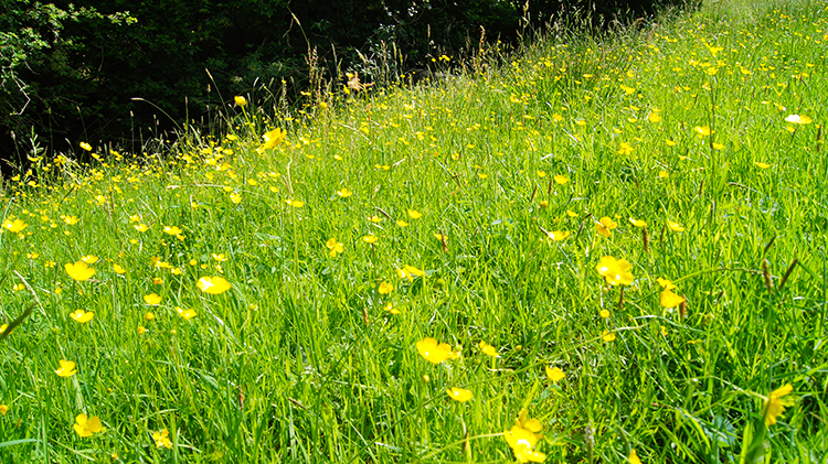 Dazzling natural array of yellow and green