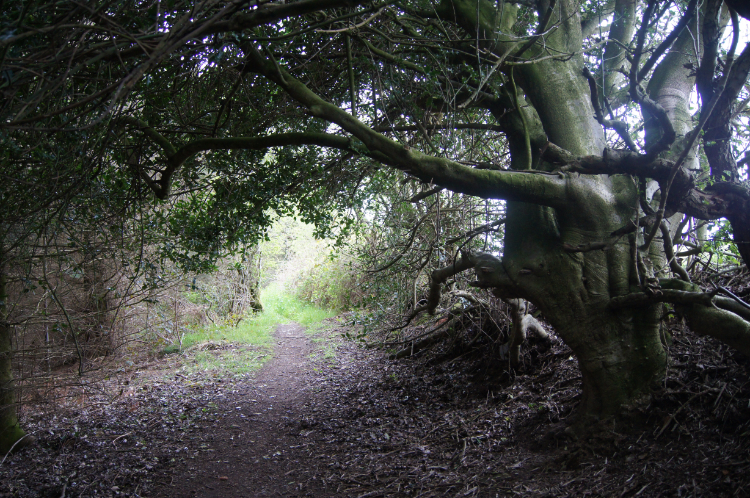 Woodland path near Bodfari