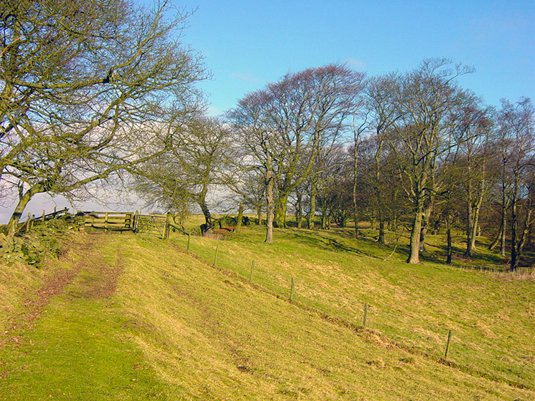 Walking from Brick House to Askwith Moor