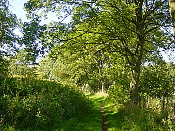 A lovely tree lined avenue to begin the ramble