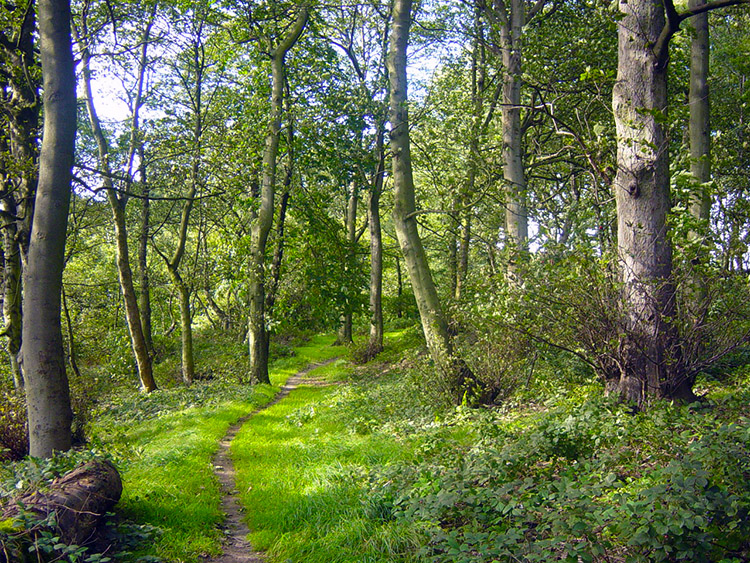 Woodland trail near Hunger Hills, Horsforth