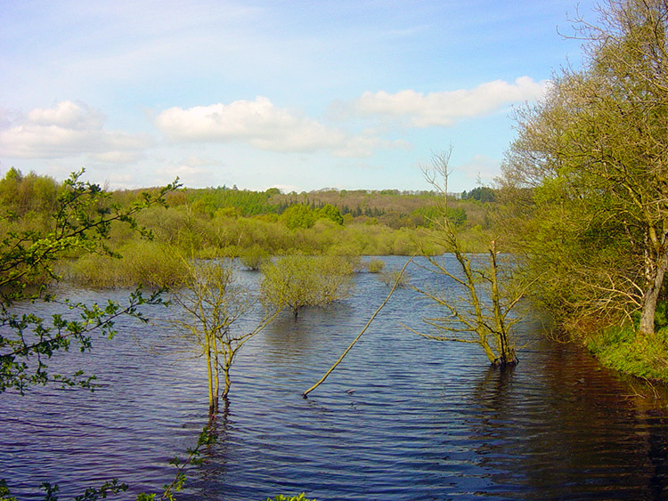 Submerged trees in Fewston's south spur
