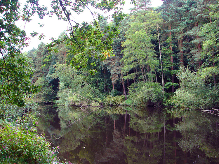The River Nidd near to Bilton Beck Wood