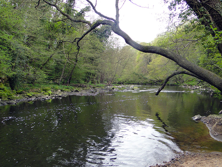 River Nidd at Scotton Banks
