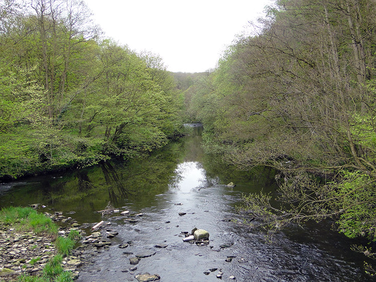 A river view from the bridge near Scotton Banks