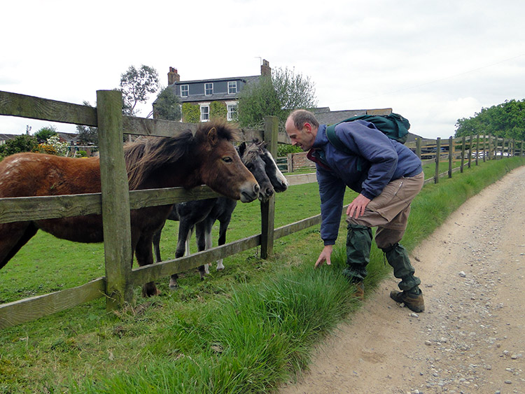 Dave meets equine friends at Poplars Farm