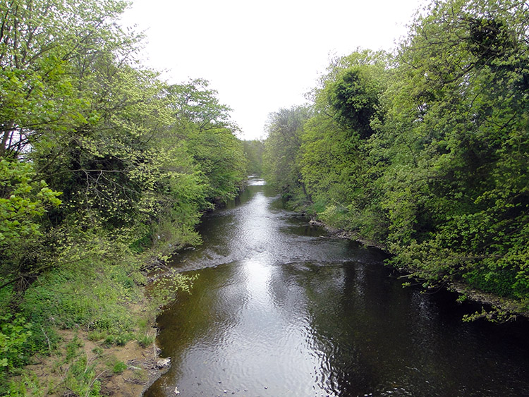 River Nidd near Goldsborough Mill Farm