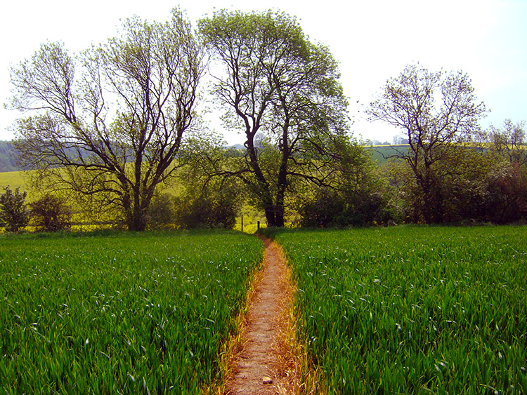 Clear path across the field