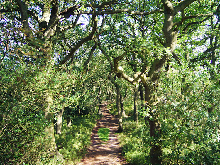 Glorious path through Ercall Wood