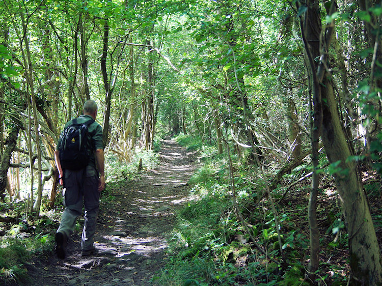 Steve makes his way through Limekiln Wood