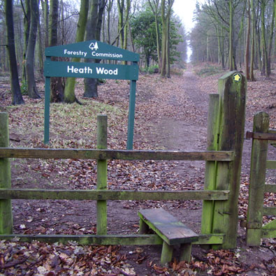 Heath Wood, a Forestry Commission site