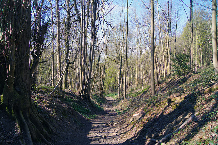 Coneysthorpe Banks Wood
