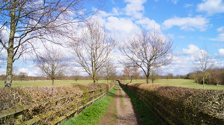 Lane leading from Studley Roger