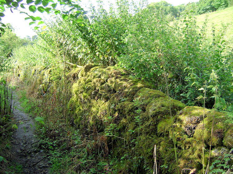 Moss on dry stone wall in Matlock Dale