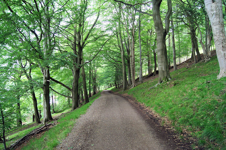 The woodland path beside Ladybower Reservoir