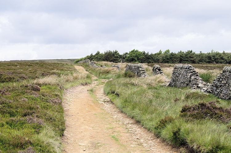 On the moorland track by Pike Low